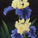 "Title: ""Iris"" / Acrylic on canvas, by NH artist Denise Clark"